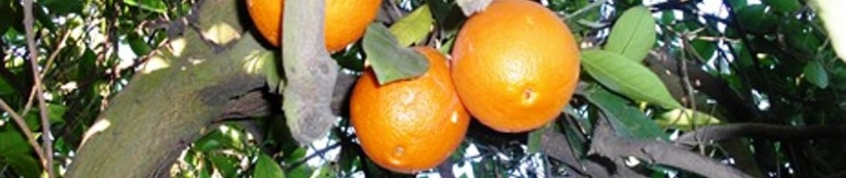 Oficina intergrupal del sur del condado de orange 1754 for Oficina de orange